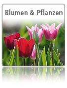 Blumen & Grünpflanzen